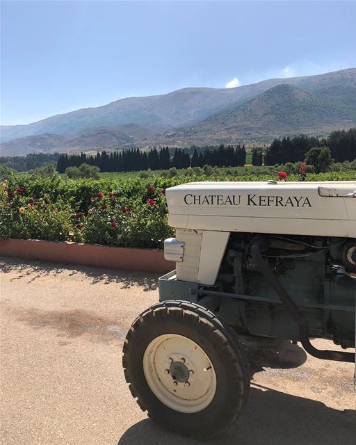 Você sabia que é possível agendar um passeio de trenzinho pelas vinícolas... (Château Kefraya)