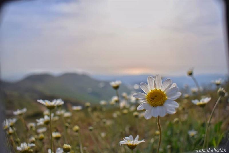 اصنع بنفسك الحياة التي ترغب ان تعيشها،،، لا أحد سيصنعها لك... lebanon ... (channel-11)