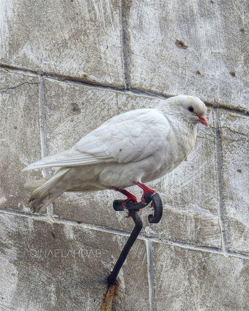 Se peut-il qu'un homme soit moins sage qu'un oiseau?______________... (Byblos, Lebanon)
