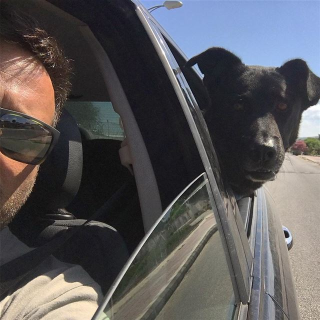 Speed is what Lumumba wants  pet  friends  dogsofinstagram  blackdog ... (En Nâqoûra, Liban-Sud, Lebanon)