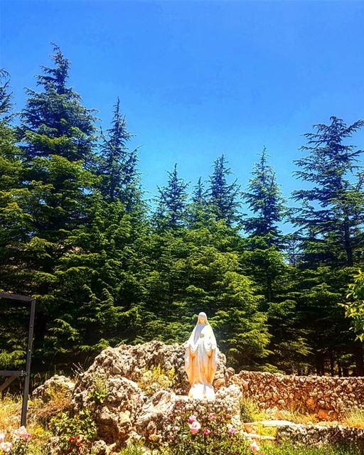 cedarsoflebanon cedarsofgod mycedars savecedar becharre ... (Cedars of God)