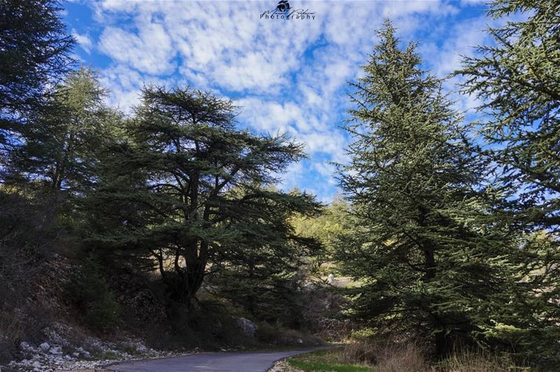 Good morning 🍃🌲• • • chouf shoufreserve lebanon beirut ... (Al Shouf Cedar Nature Reserve)