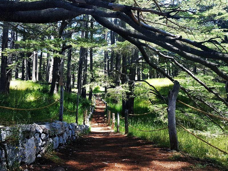 cedarofgod cedar bcharre livelovecedars livelovebcharre northlebanon... (Cedars of God)