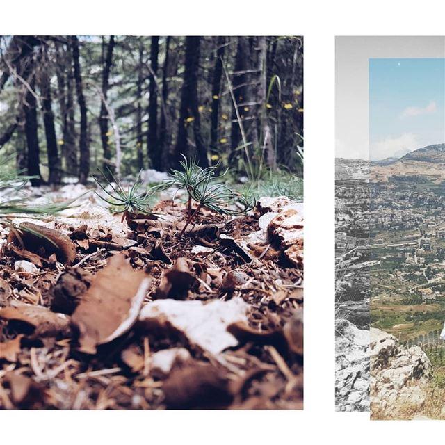 M I N I A T U R E S cedars ig_captures awesome_shots wonderful_places... (Arz el Bâroûk)
