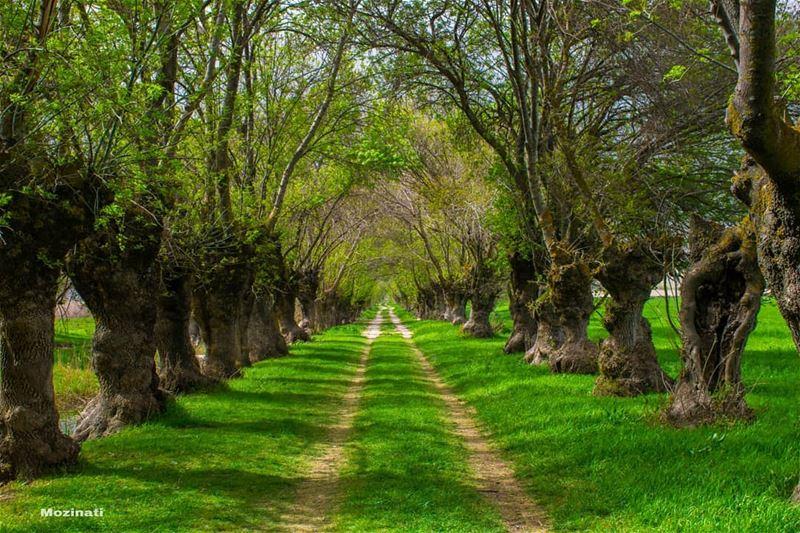 When the path reveals itself follow it ☺.. ================================ (`Ammiq, Béqaa, Lebanon)
