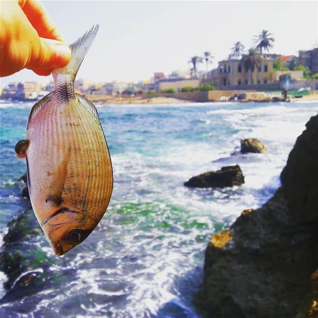 Happy Fshing Day Sweet Monday 🎣🐠 🌊🌊🌊🌊🌊🌊🌊🌊🌊🌊... (Enfé, Liban-Nord, Lebanon)