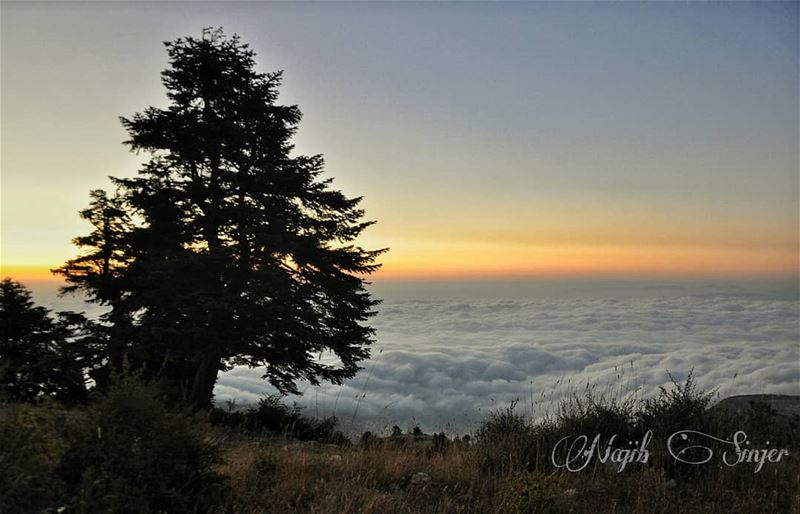 qamouaa sunset fog woods clouds akkar hiking hikingadventures ... (El Qamouaa)