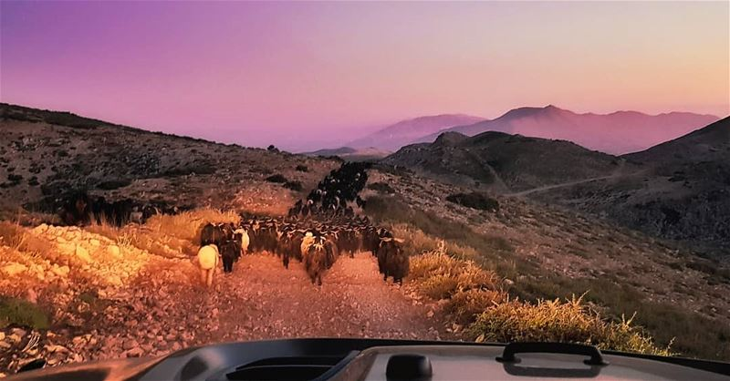The Goats Keeper lebanon sunset mountains scenery sunsets ...