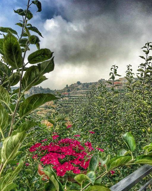 Mountain mode🍃🍃🌺.. instalebanon mylebanon lebanon lebanontraveler ... (Lebanon)
