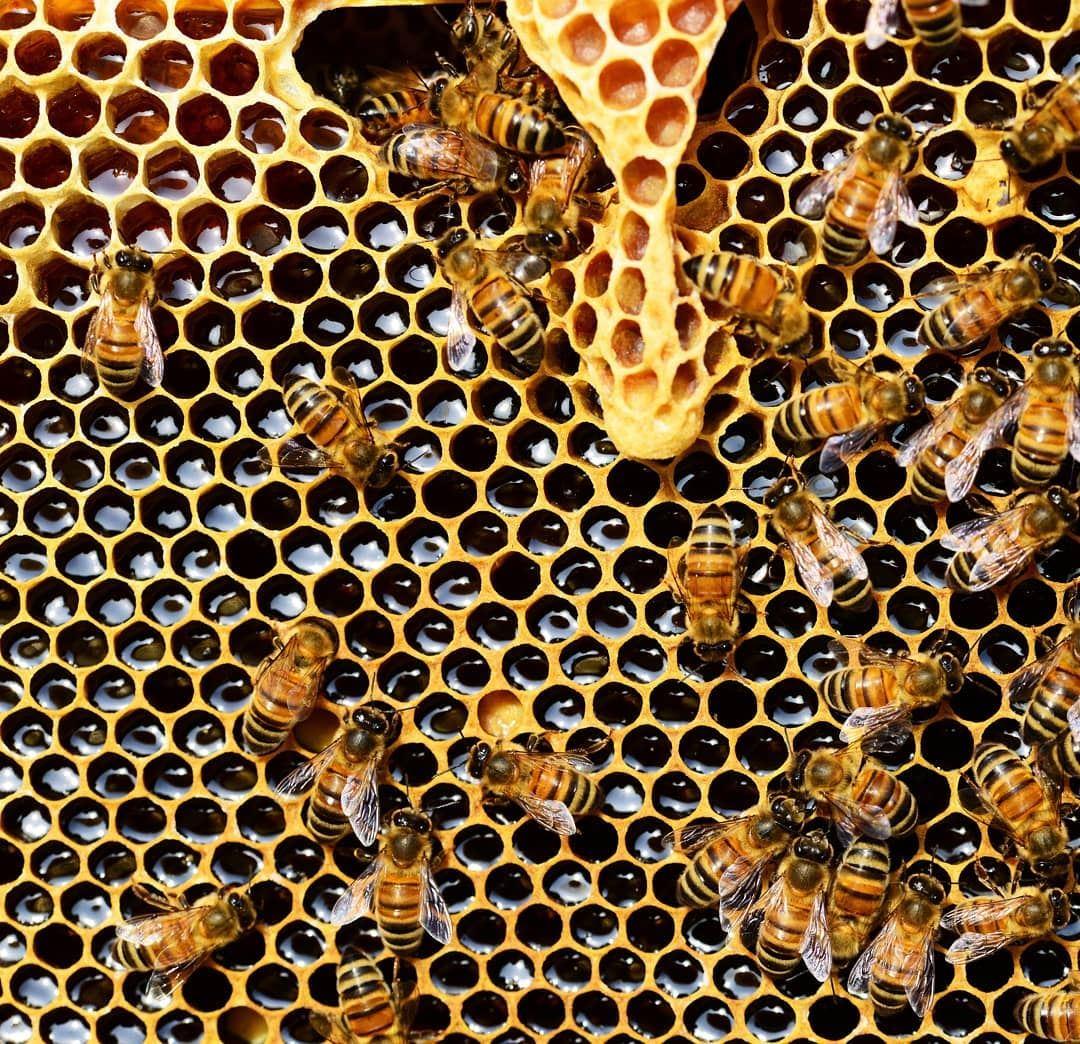 🐝😍 Bee BusyBee HoneyComb jGrove ForestHoney Honey Raw Pure ...