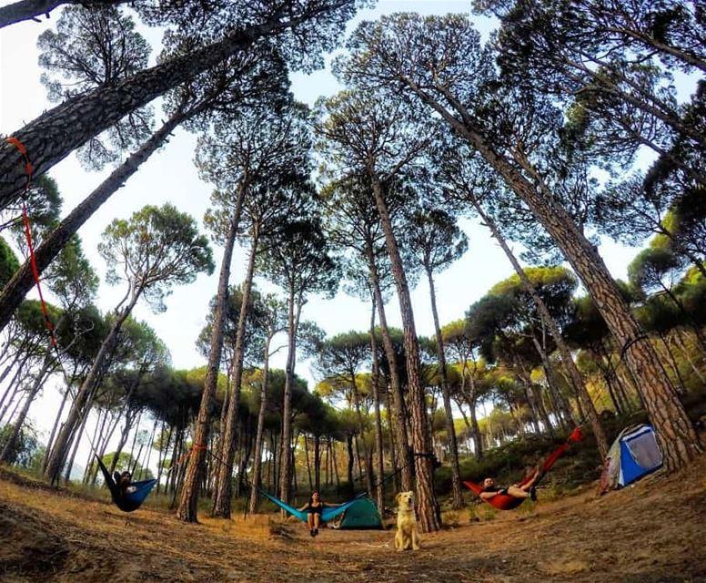 Good morning from aghmid valleycamp camping hammockcamping ...