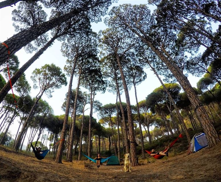 Hammocks Relax Chill ValleyCamp Aghmid Chouf Lebanon livelovechouf... (Aghmid, Mont-Liban, Lebanon)