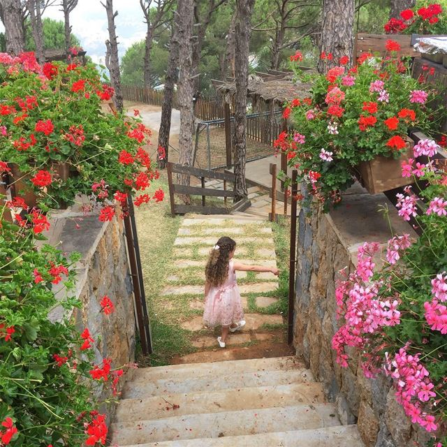 neice summer flowers nature colorful outdoors beautiful lebanon ... (Ô Bois restaurant)