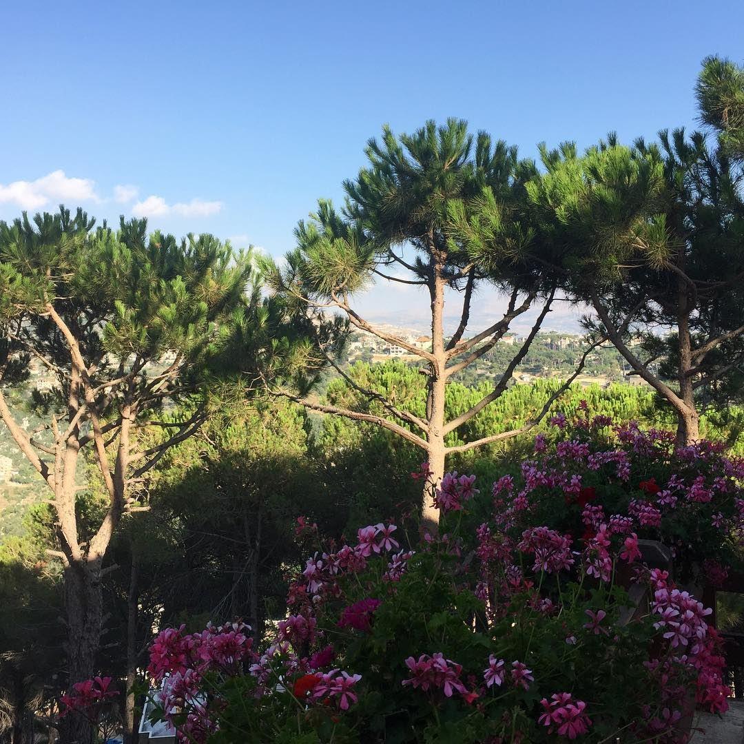 lebanon pinetrees mountains summer nature wanderlust beautiful ... (El Khenchâra, Mont-Liban, Lebanon)