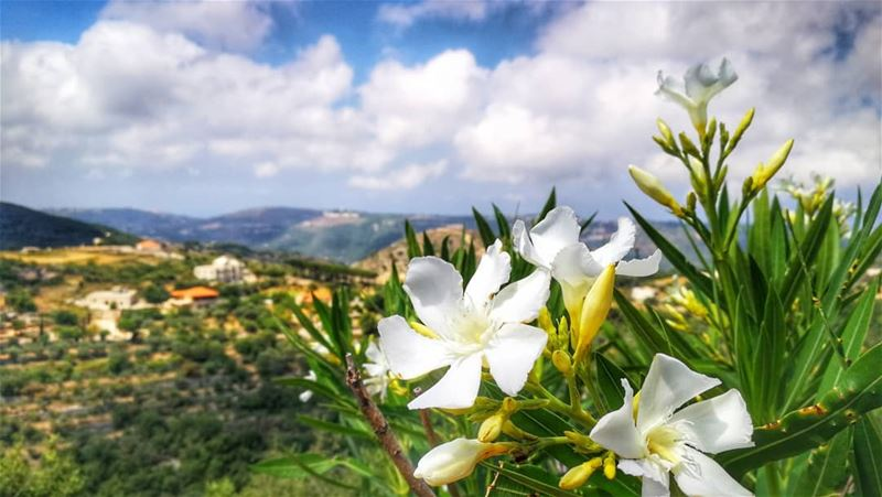 """When you have once seen the glow of happiness on the face of a beloved... (Aabdillé, Liban-Nord, Lebanon)"