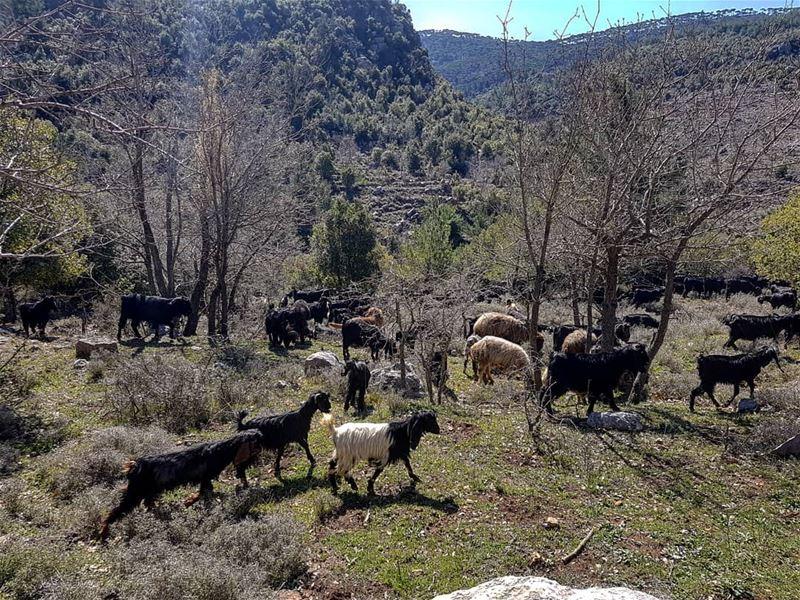Hello sunshine 🐐🐐🐐 SundayMood SundayVibes Goats Goat Sunday ...