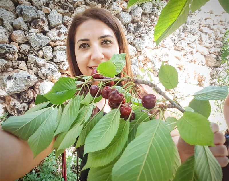 Life is a bowl of cherries ...Except some of them are sour  🇱🇧 ... (Tannurin Al Fawqa, Liban-Nord, Lebanon)