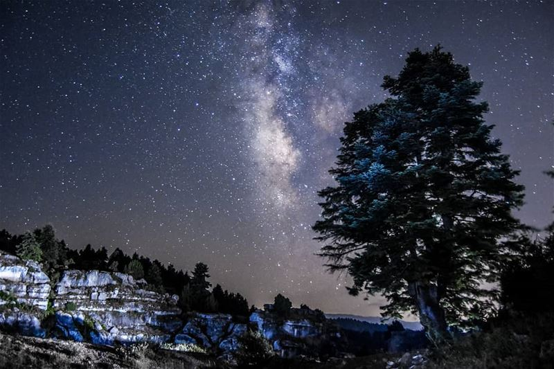 A chilly night, The forest of Kamoua Akkar 14/7/2018 stars sky forest ... (`Akkar, Liban-Nord, Lebanon)