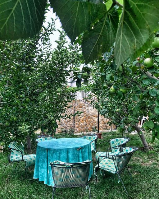 Think Green 🍏🍃🍏... green nature lebanon summer vacation apple... (Lebanon)