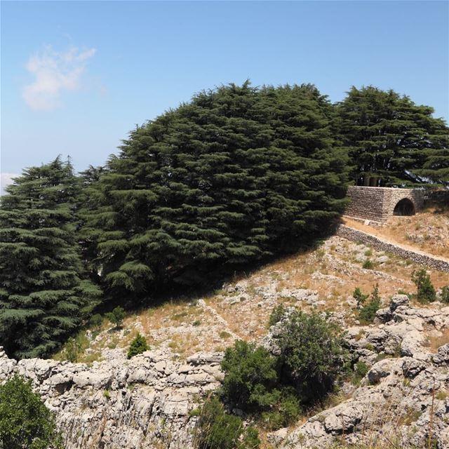 O Vaticano reconhecerá o Líbano como destino de peregrinação em 2019,... (Cedars of God)
