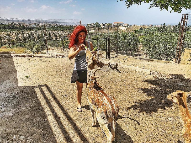 | Happy morning |  tyr  sour  deers  feedingtime  relax  lebanon ... (Al-Yasmine Guesthouse)