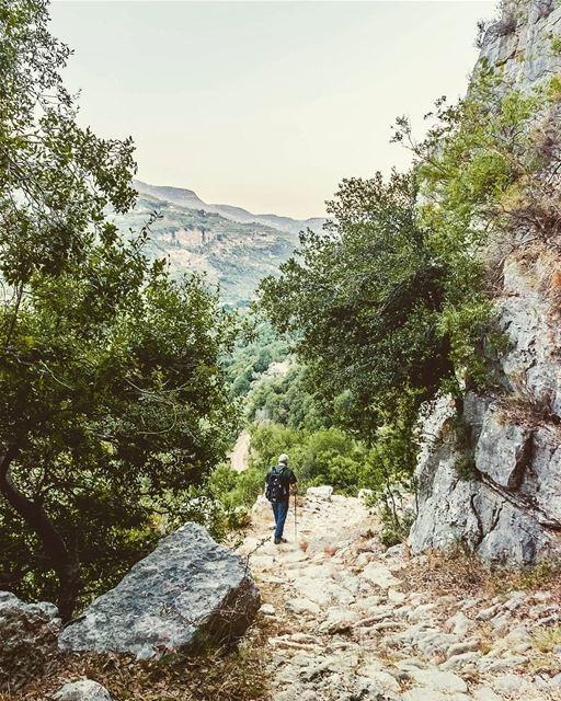 ____________________________________________________ treehugger961 ... (Mazra`At Ash Shuf, Mont-Liban, Lebanon)