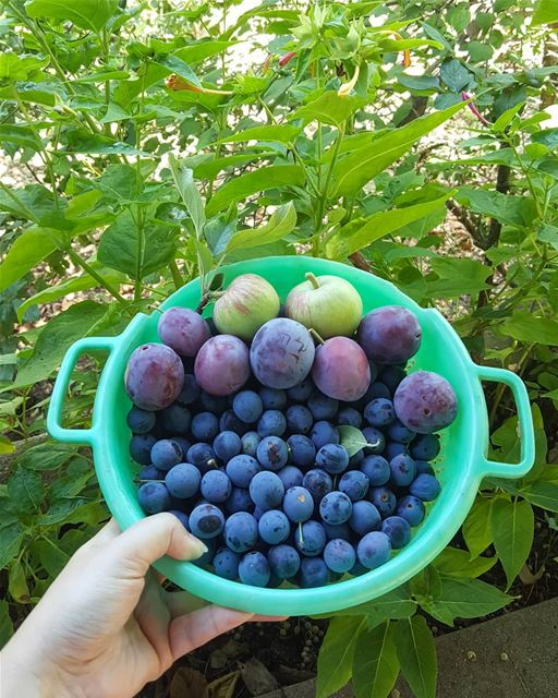 Bounty of the day 😍😍💜💜💜💚 ............. Lebanon ...