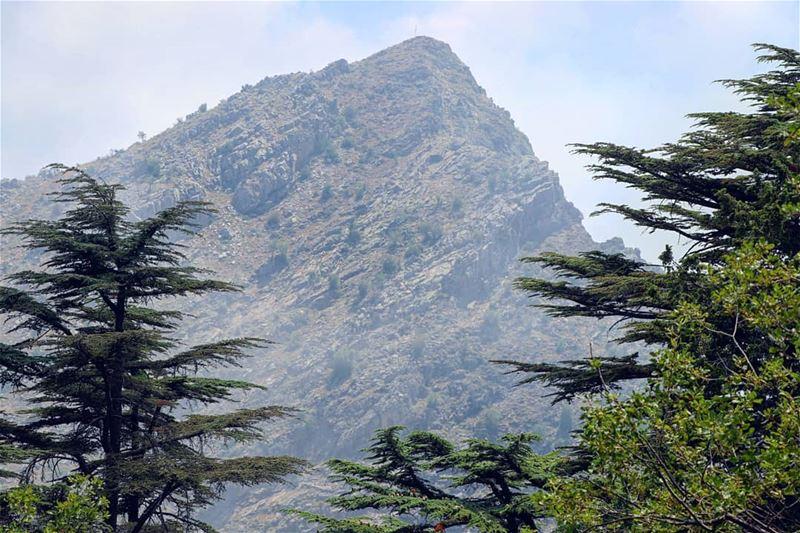 Jurassic..... Lebanon LiveloveLebanon lebanese nature Mountains ... (Cedar Reserve Tannourine)