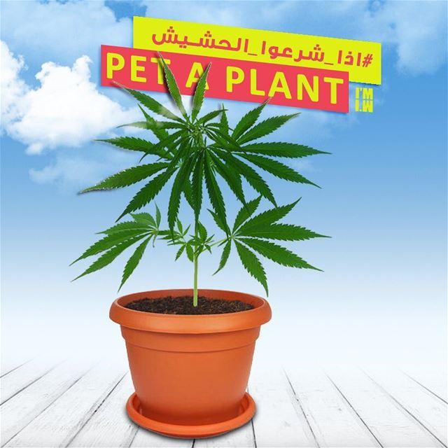 اذا_شرعوا_الحشيش ........... lebanon lebanonnow artdirection ...