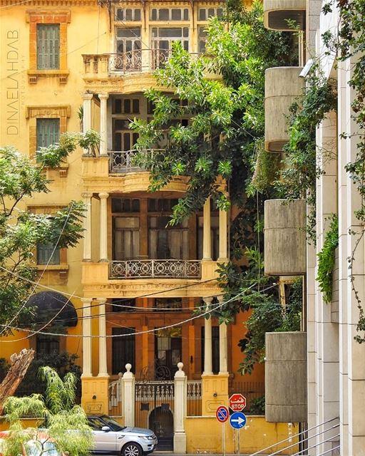 🔅________________ 961lens naturephotography nature_perfection ... (Beirut, Lebanon)