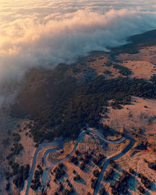 The heavenly Lebanon 🇱🇧🌲💛... (Al Shouf Cedar Nature Reserve)
