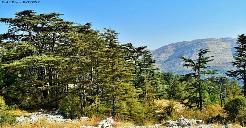 Our land, our heritage, our real treasure....let's preserve it 🌲 ... (Arz Tannoûrîne)