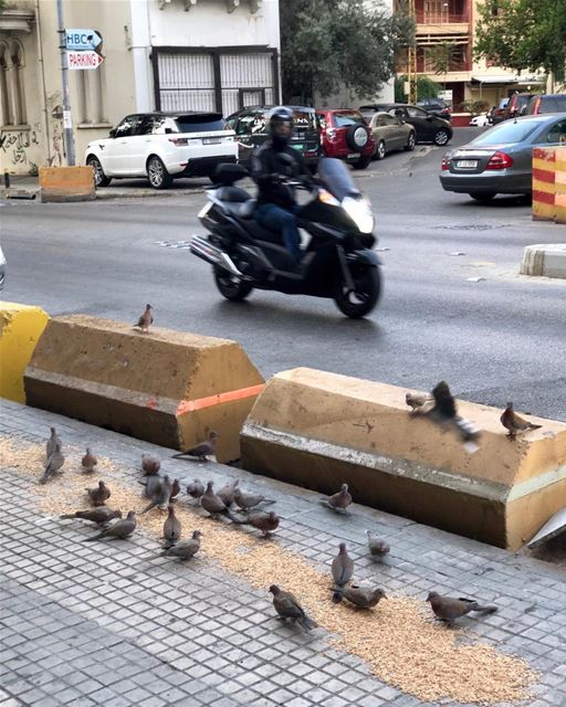 The only time to meet Beirut's pigeons is real early. pigeons beirut ...