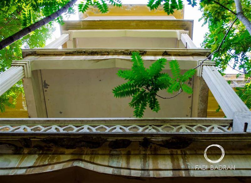 Concrete green........ travelawesome exploretheglobe ... (Achrafieh, Lebanon)