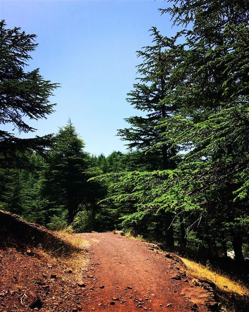 Nature = Cure 🌲   lebanon  forest  reserve  northlebanon  hiking  nature ... (Hadath Al Jubbah, Liban-Nord, Lebanon)