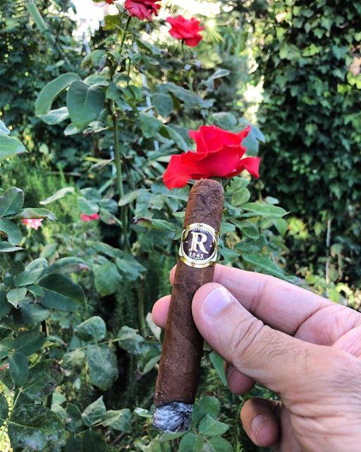 Robina the best cigar.... cigar cigars flowers garden robina garden... (Zahlé, Lebanon)
