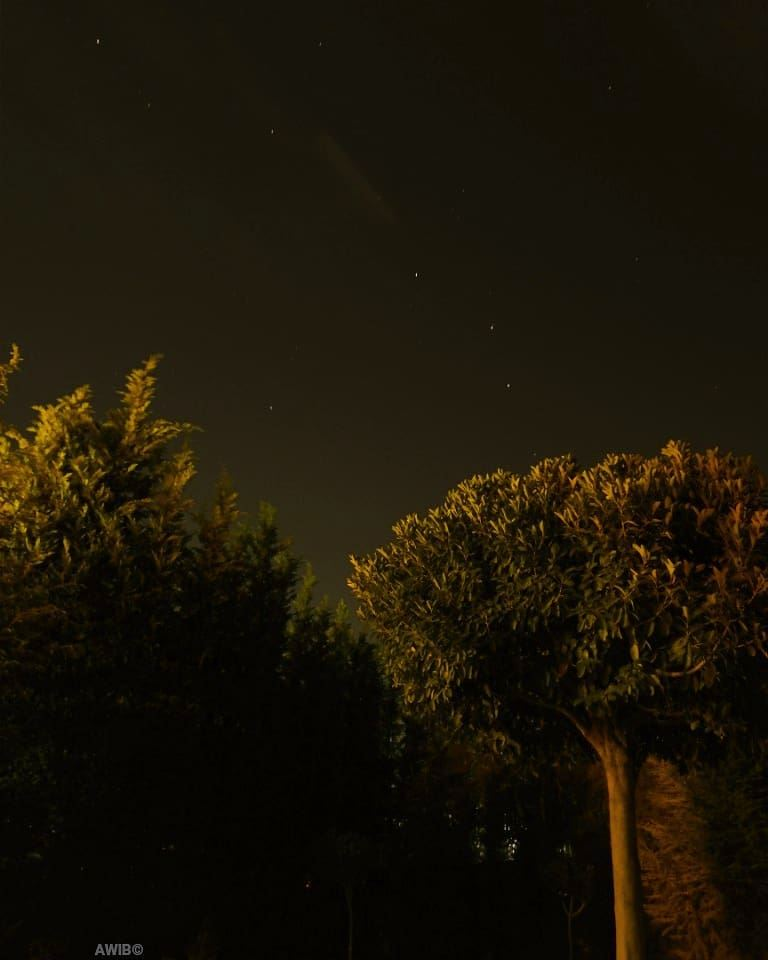 stars tree night photo picture awandererinbeirut sky nightscape ...