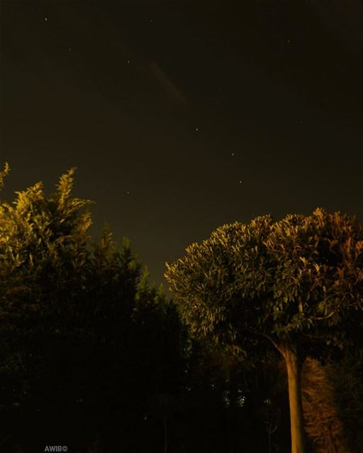 stars tree night photo picture awandererinbeirut sky nightscape ...