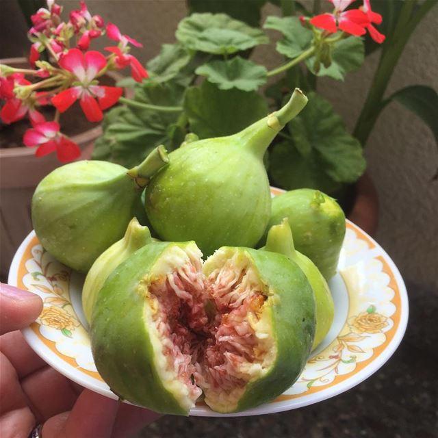 Lebanese Figs 🍀 تين لبناني livelovelebanon figs lebanon 🇱🇧 ❤️