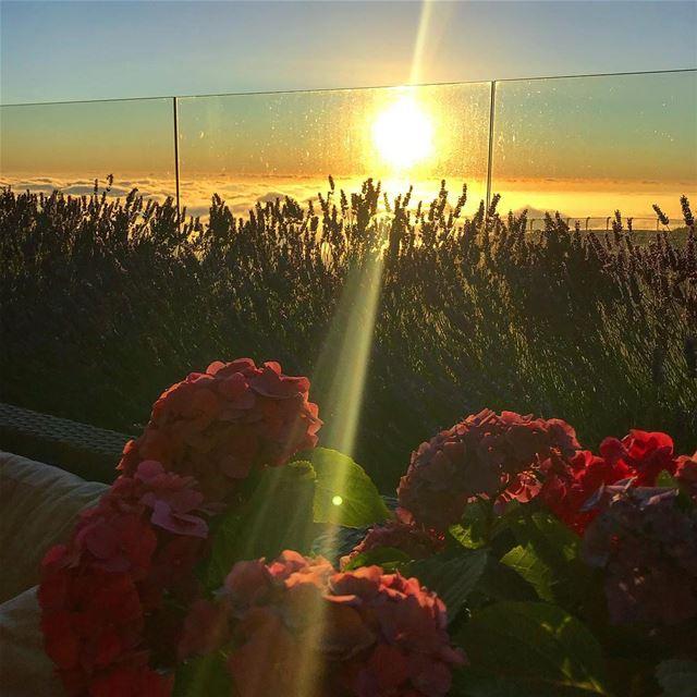 🌺🌤.. sunset whatsuplebanon instalebanon lebanon picoftheday flowers... (Lebanon)