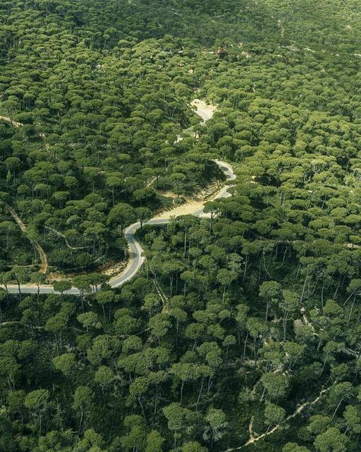 Vista aérea de magnifica floresta de pinhos em Jezzine. É deste tipo de árv (Jezzîne, Al Janub, Lebanon)