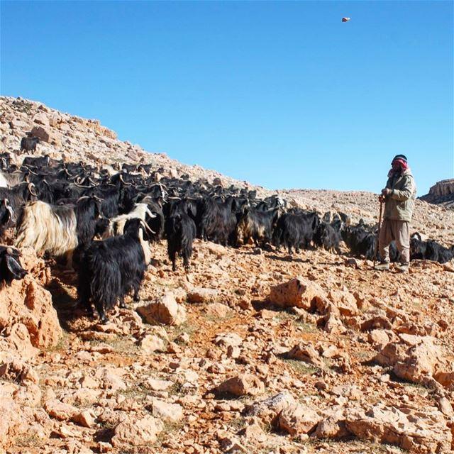 La faute du troupeau vient du berger. lebanon lebanon_hdr lebanon🇱🇧 ... (Qurnat as Sawda')