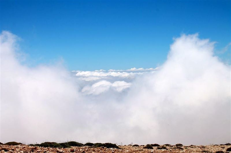 Nubivagant (adj.) wandering in the clouds; moving through the air lebanon... (Cedars of God)