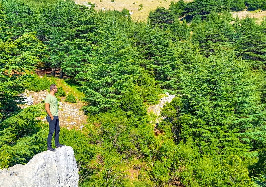 The only place i wanted to be RIGHT NOW! GoodMorning... (Al Shouf Cedar Nature Reserve)