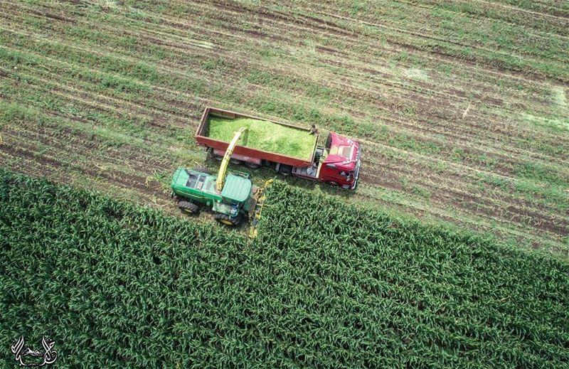 من سهل الخيرات، سهل_عكار مع إدخال الأساليب الحديثة في عملية الزراعة ❤...