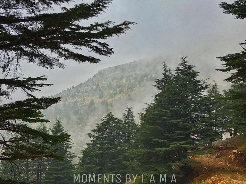 🌲🌧 landscapephotography landscape naturephotography nature... (جبل الاربعين)