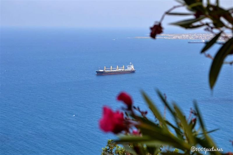 When in North lebanon...... amazing view lebanon whenin tb ... (Lebanon)