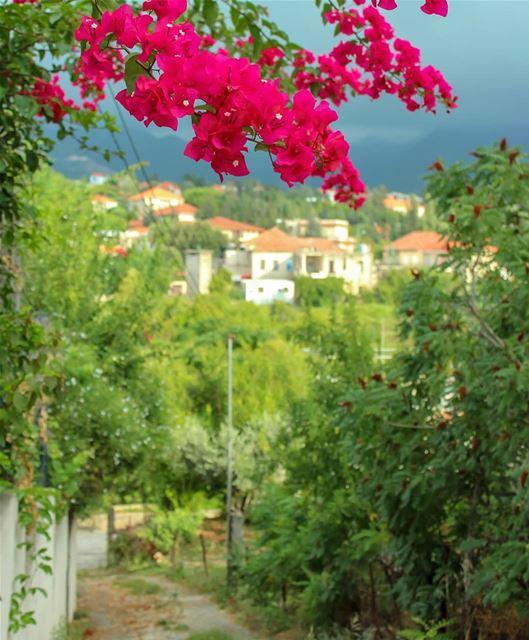 ضيعة 🌺Bonjouur ⛰ lebanon beino akkar liveloveakkar flowering ... (Beïno, Liban-Nord, Lebanon)