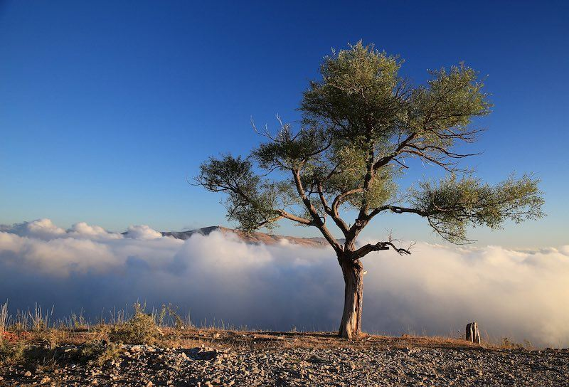 🌳☁️ a7labaladbil3alam 🇱🇧..... photo love photograph ... (Qanat Bakish, Mont-Liban, Lebanon)