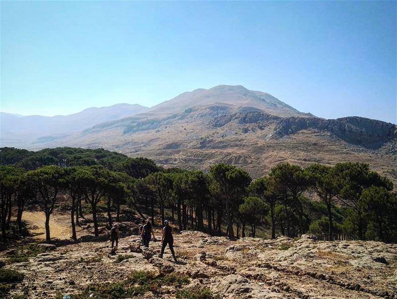 mountains mountlebanon lebanon lebanese trees natural nature ... (Mount Lebanon Governorate)